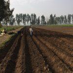 Monsoon Harvest Farms