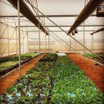 The Urban Farm