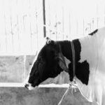 R.R. Dairy Farms