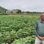 Kama International Organic