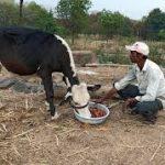 Al Firas Agro Farm