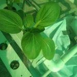 Aquahyd Farm