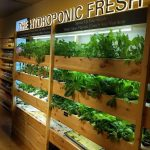 Growtopia Farms