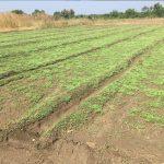 Sunil Organic Farm
