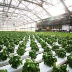 Urban Sprout Farm