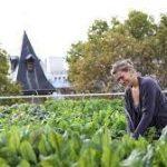 Fracia – The Urban Farms