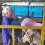Nandini Farms